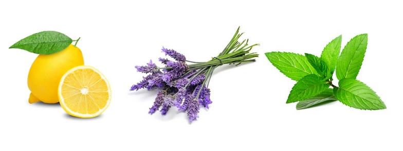 Imagini pentru lavender peppermint lemon